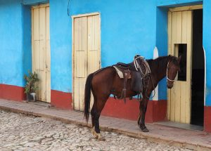 Лошади на Кубе