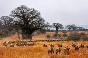 7. Национальный парк Тарангире
