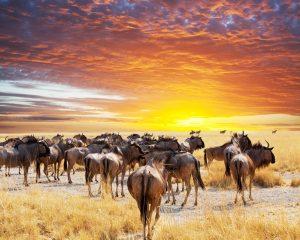 Национальный парк Катави